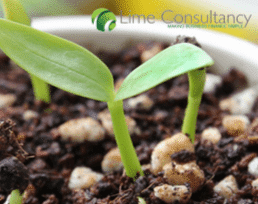 growing small business UK